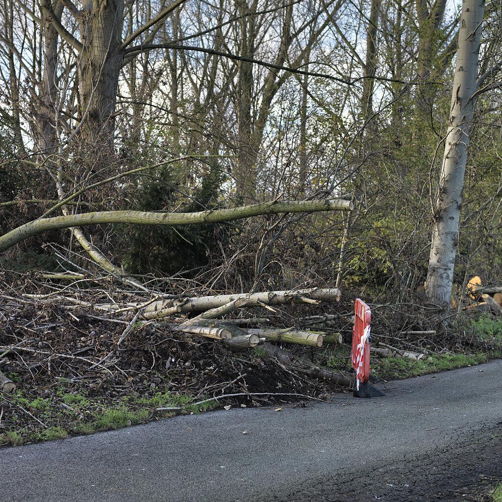 chopped-trees.jpg